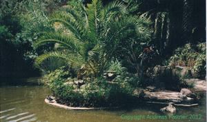 Palmen im Wasser